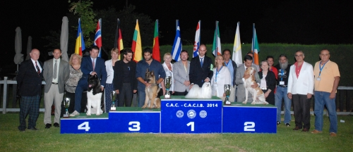 3 x CACIB / GREEK WINNER SHOW 2015 / Evening Shows